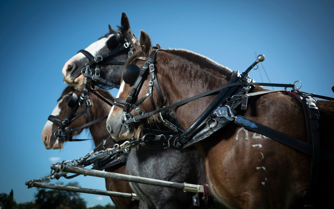 Scenic Rim to celebrate the giants of the horse world